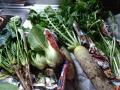 1123野菜