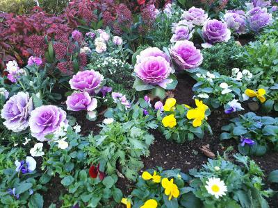DSC_1265_1221 散歩道のバス通りに面した花壇_400