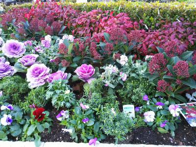 DSC_1263_1221 散歩道のバス通りに面した花壇_400