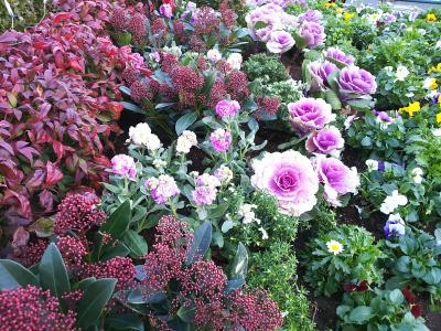 DSC_1264_1221 散歩道のバス通りに面した花壇_400