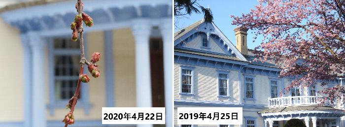 20200422桜