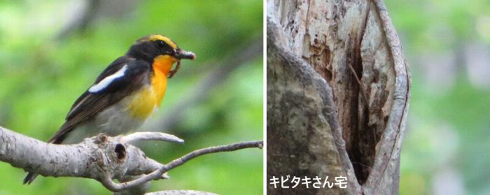 20200712野幌森林公園2