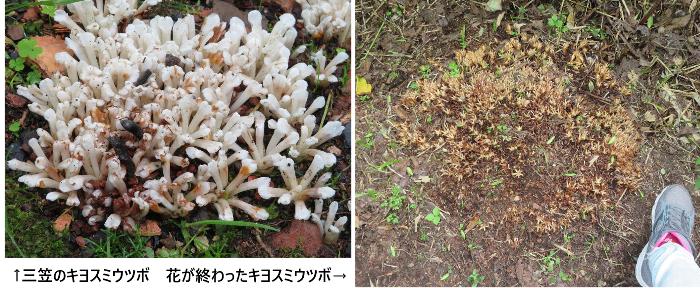 20200712野幌森林公園3