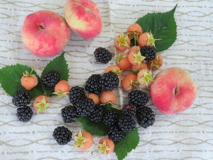 20200829果物
