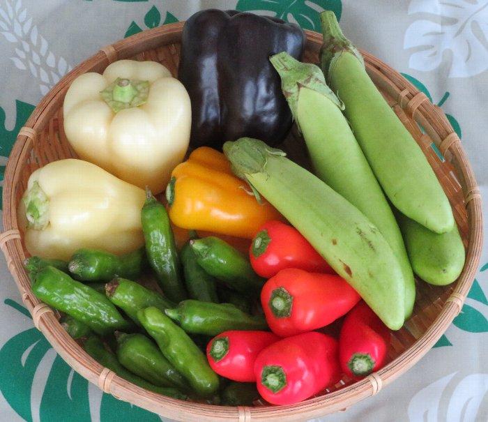 20200921南幌産野菜
