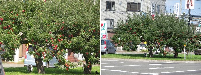 202011平岸リンゴ並木