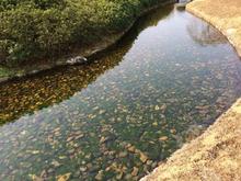 後楽園のきれいな水路