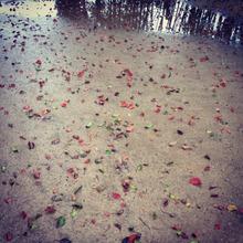 春雨の落ち葉と水たまり
