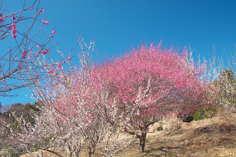 里山に訪れる春