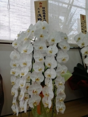 【新店】三和 中華ソバ店-9