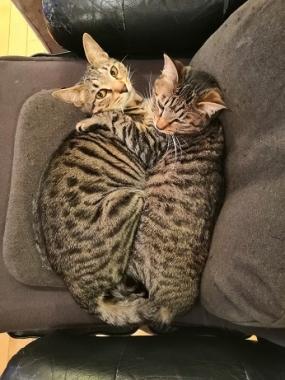マミとサン2