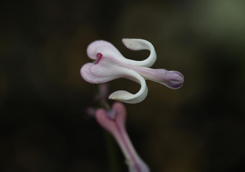 高山植物9200714