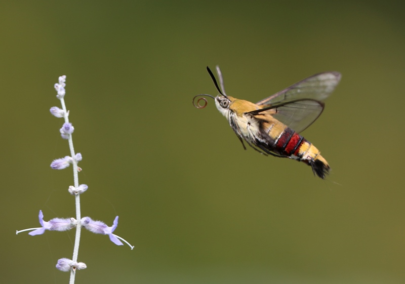 ハチ5200811