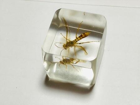 トガリハチガタハバチの樹脂標本