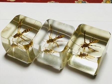 ムモンホソアシナガバチとそれに似るハチの樹脂標本