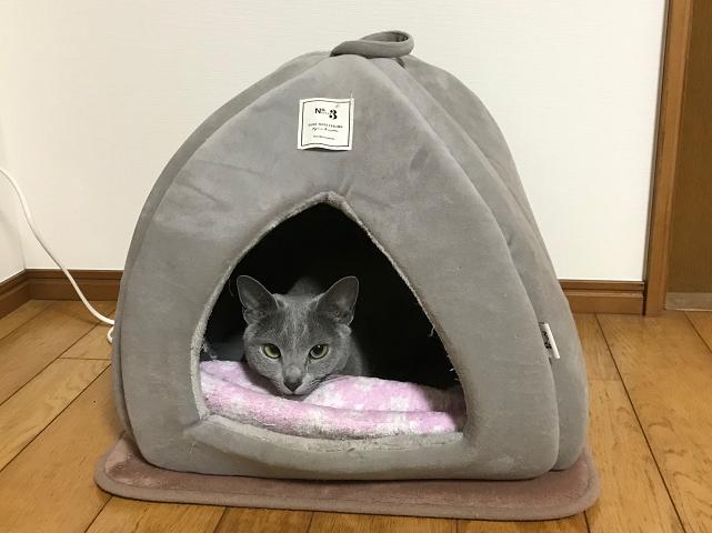 ネコのさくら20210121