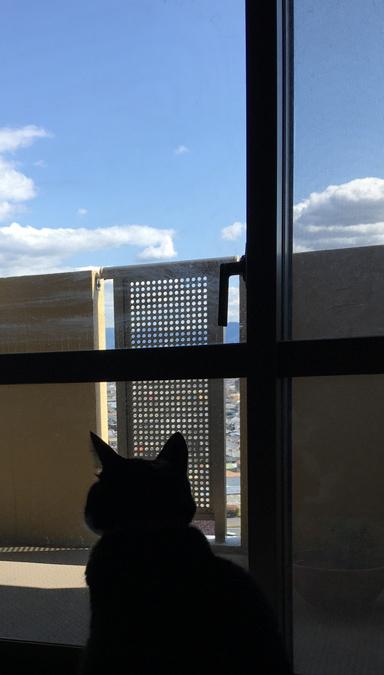 空を眺める猫