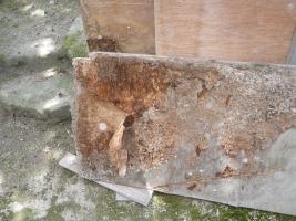 放置木材の被害