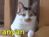 profile-anyan1.jpg