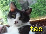 profile-tac1.jpg
