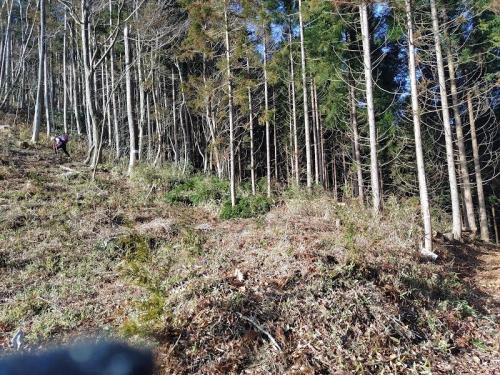 林道からやぶ道に入る