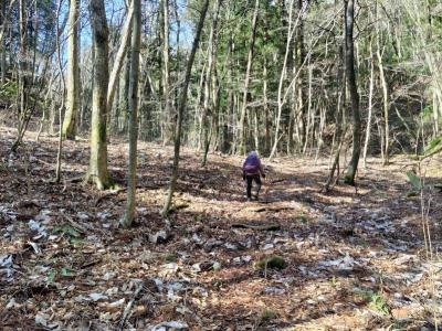 林の中の登山道