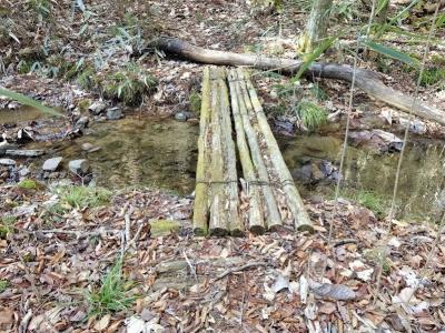 林の登山道の渡渉