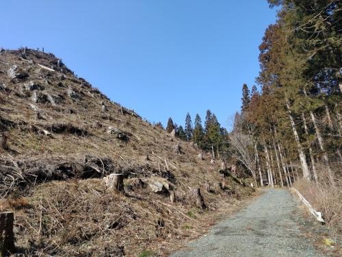 神社から七つ滝に向かう林道