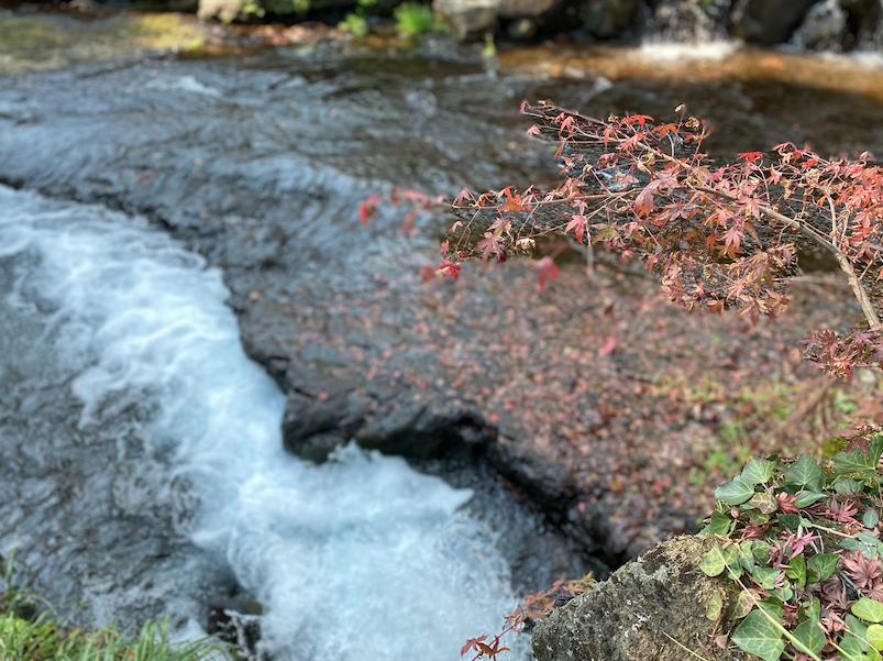 スクリーンショット 2019白川水源2