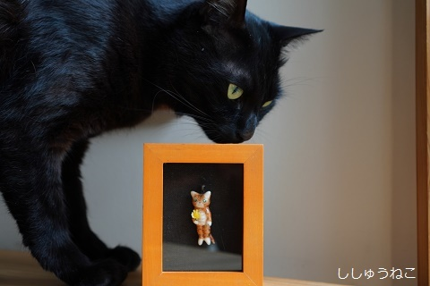 Jkとせっぴーブローチ猫