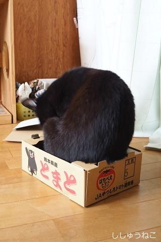 Jkとトマト箱