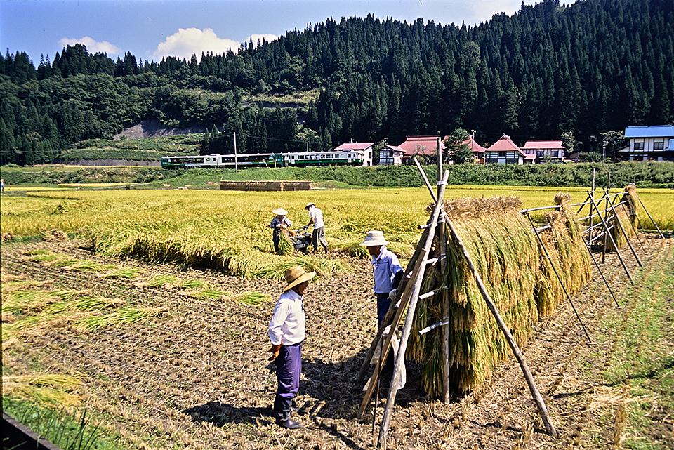 nakagawa2002