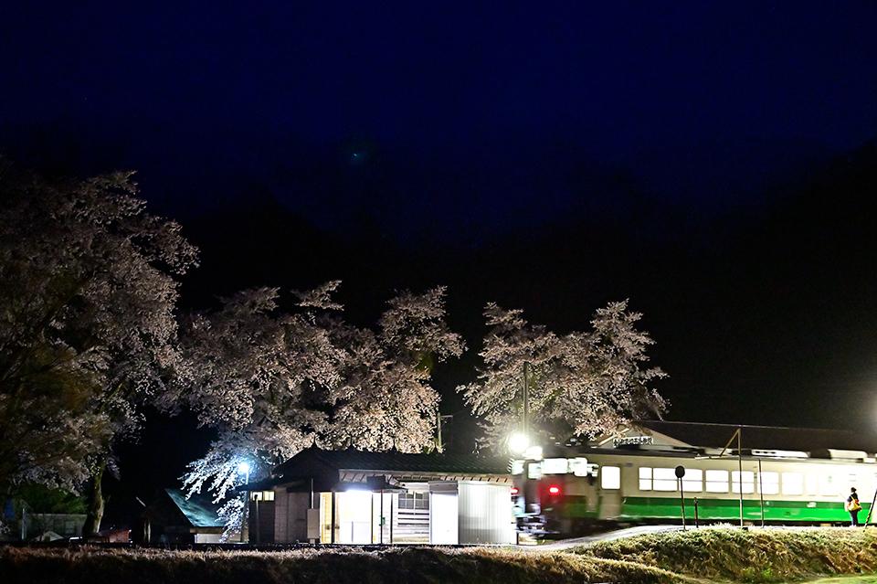 nakagawayozakura2