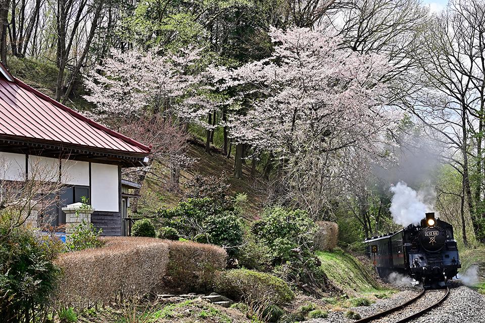 satoyamawoiku