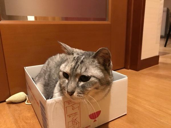 kijikaoara9.jpg