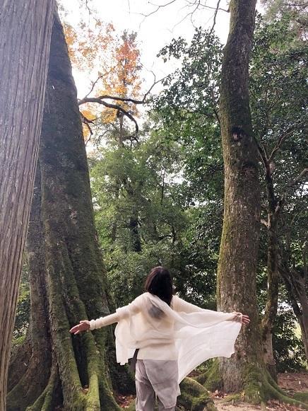 須佐神社の森 - コピー