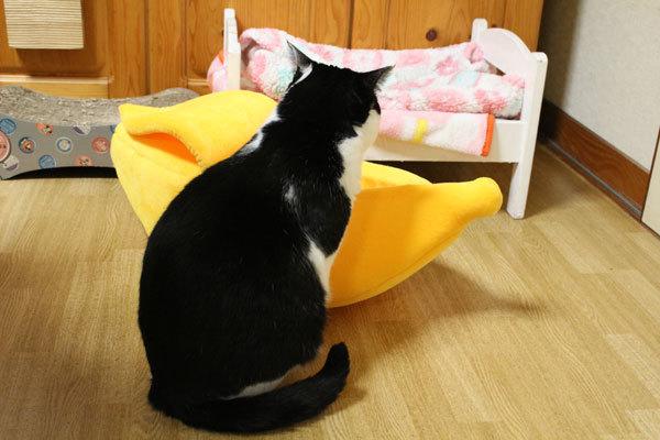 カンパイ!猫ベッド