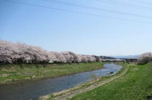 杜の里の桜並木