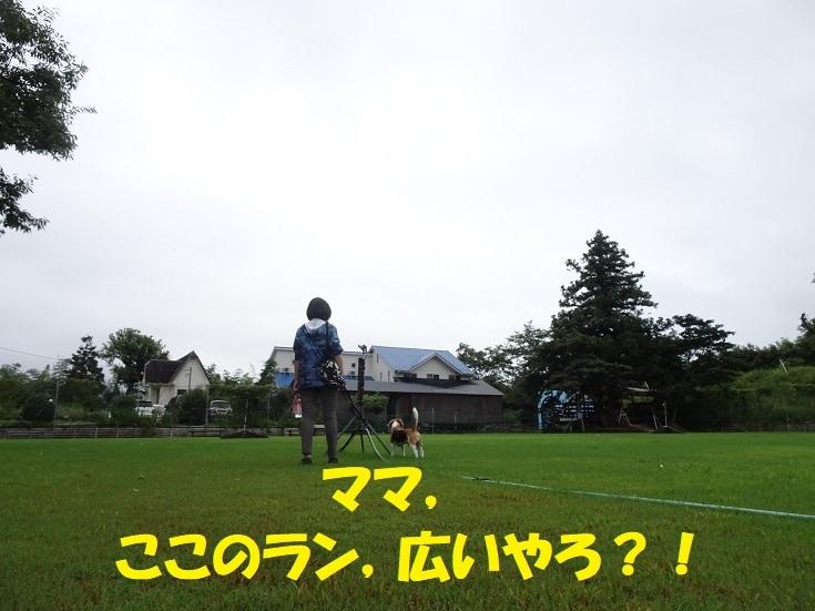 DSC05815③
