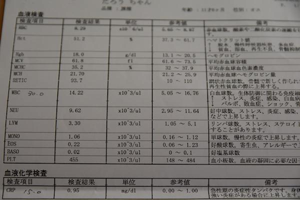 1DSC_4185.jpg