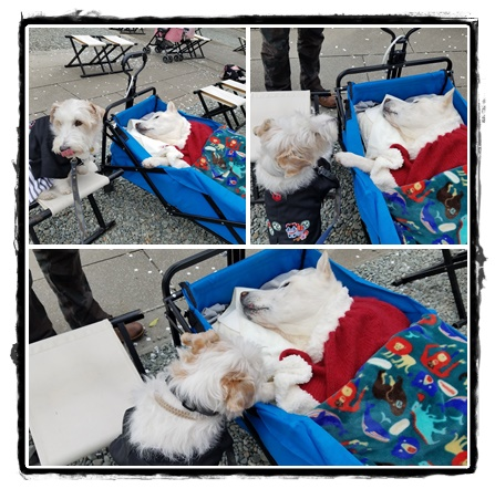 cats6t8yguytyg.jpg