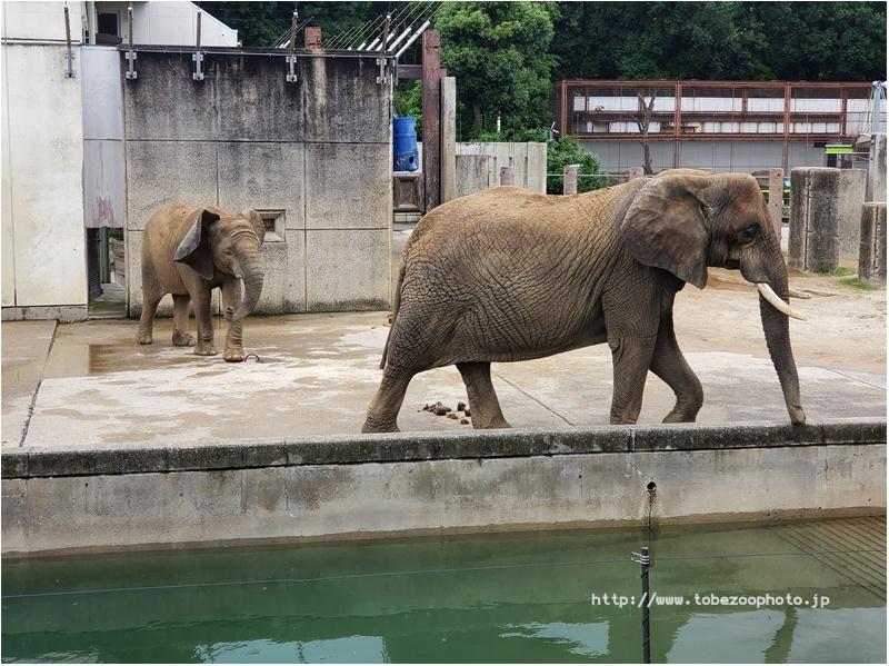 ジップライン とべ動物園・準備工事中の様子