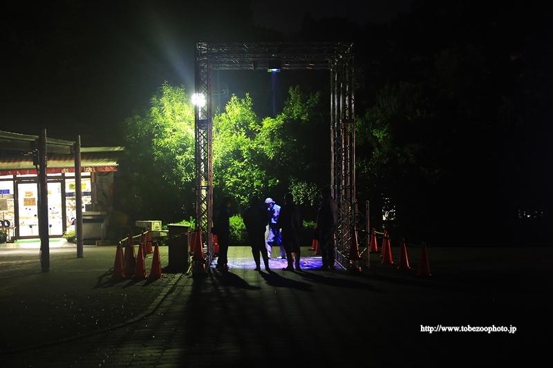 とべ動物園 園内イルミネーションイベント開催 2020年