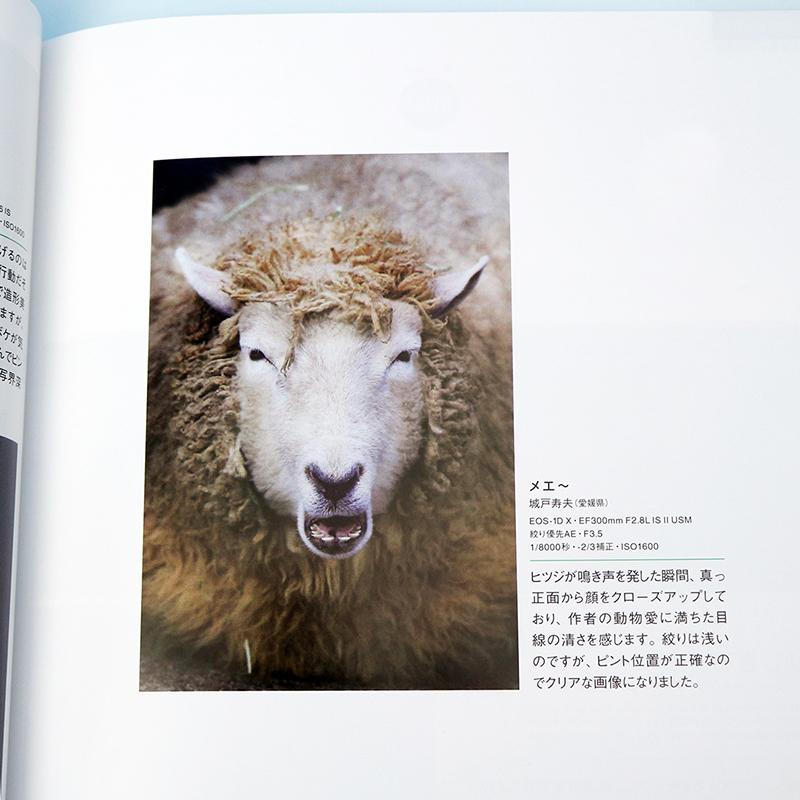 Canonマンスリーフォトコンテストで賞をいただきました。タイトル「メエ~」 撮影場所 : 愛媛県立とべ動物園
