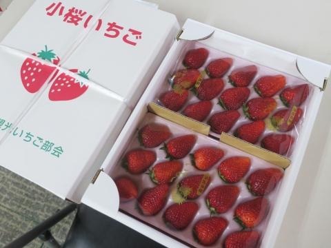 「美味しい苺が届きました!」①