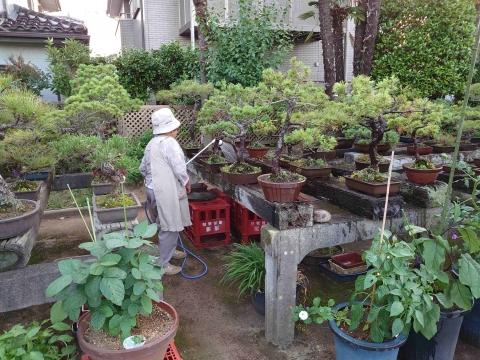 「母の盆栽の為にノズルとホースを買ってあげました!」⑨_R