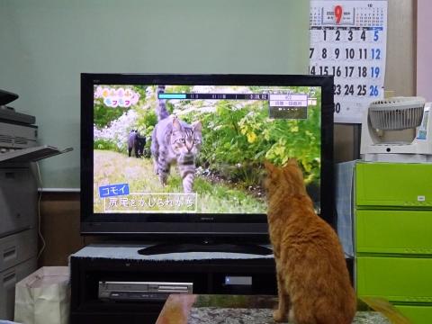 「如来くんはTVが大好きです!」①