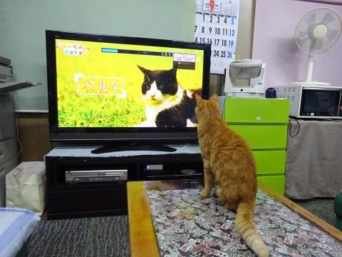 「如来くんはTVが大好きです!」②