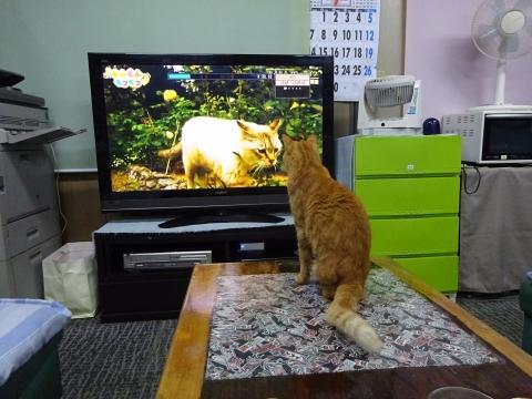 「如来くんはTVが大好きです!」③