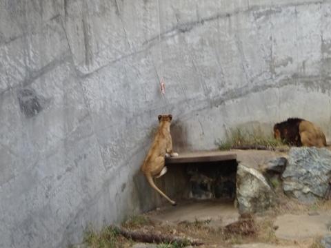 「総務企画委員会県内視察」産業廃棄物処分場・かみね動物園㉖_R